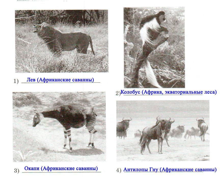 § 24. Разнообразие природы Африки