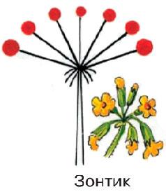 § 12. Соцветия