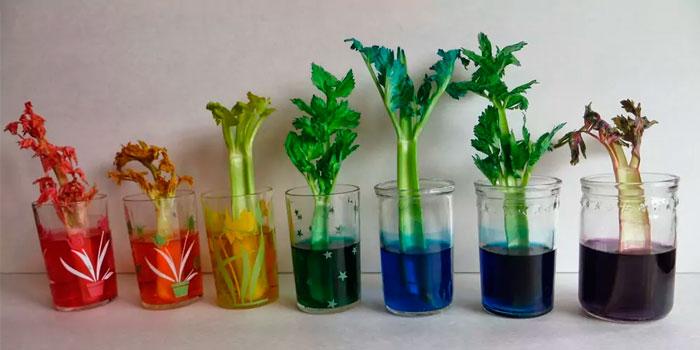 § 18. Испарение воды растениями. Листопад