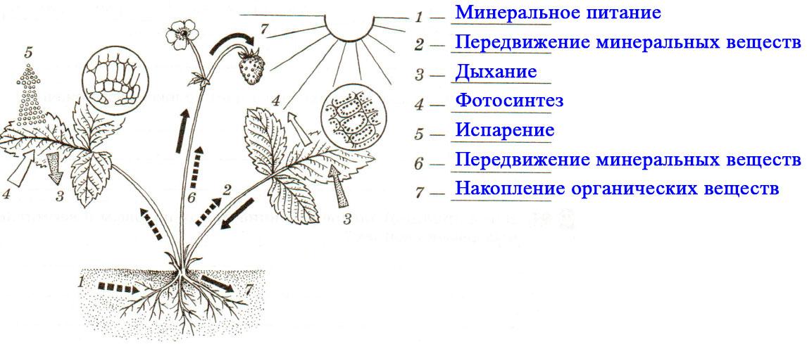 § 20. Прорастание семян