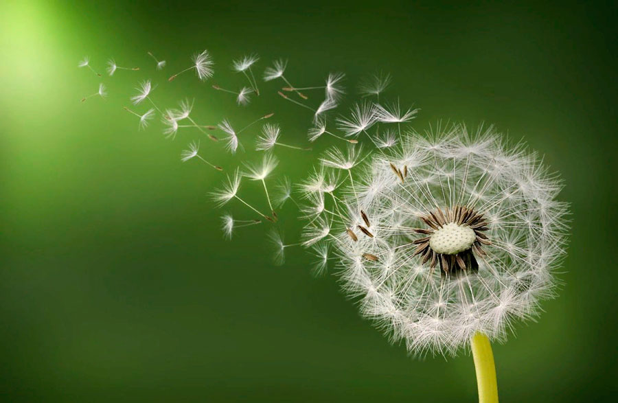 § 21. Способы размножения растений