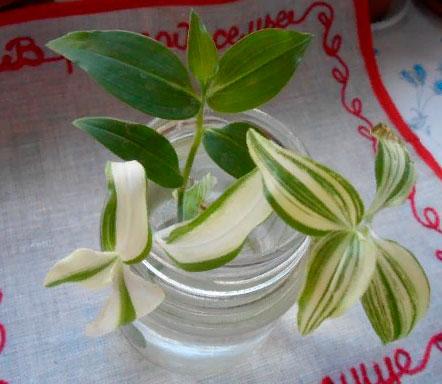 § 25. Вегетативное размножение покрытосеменных растений