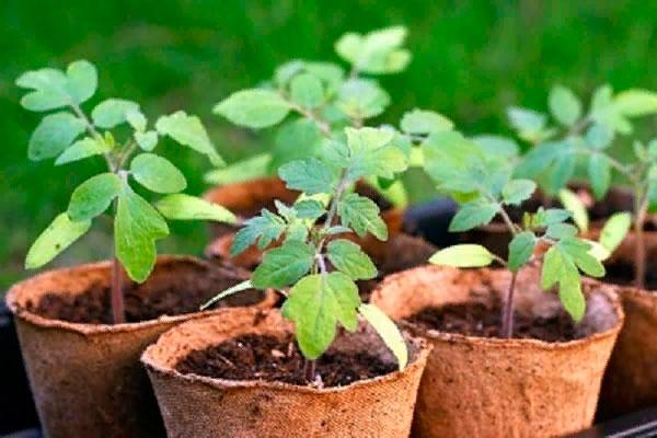 § 30. Культурные растения