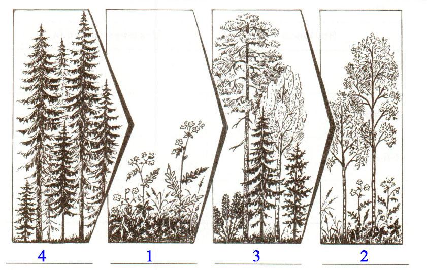 § 31. Растительные сообщества