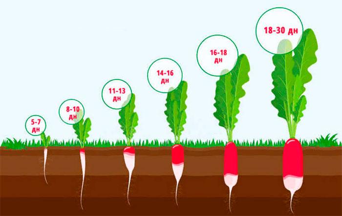 § 4. Условия произрастания и видоизменения корней