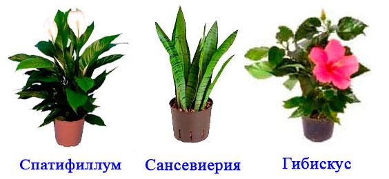 § 8. Влияние факторов среды на строение листа. Видоизменения листьев