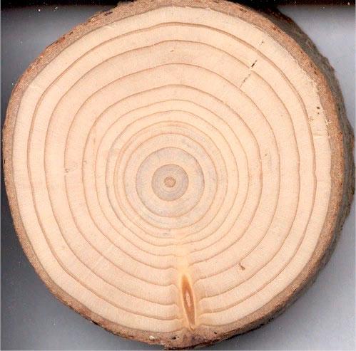 § 9. Строение стебля