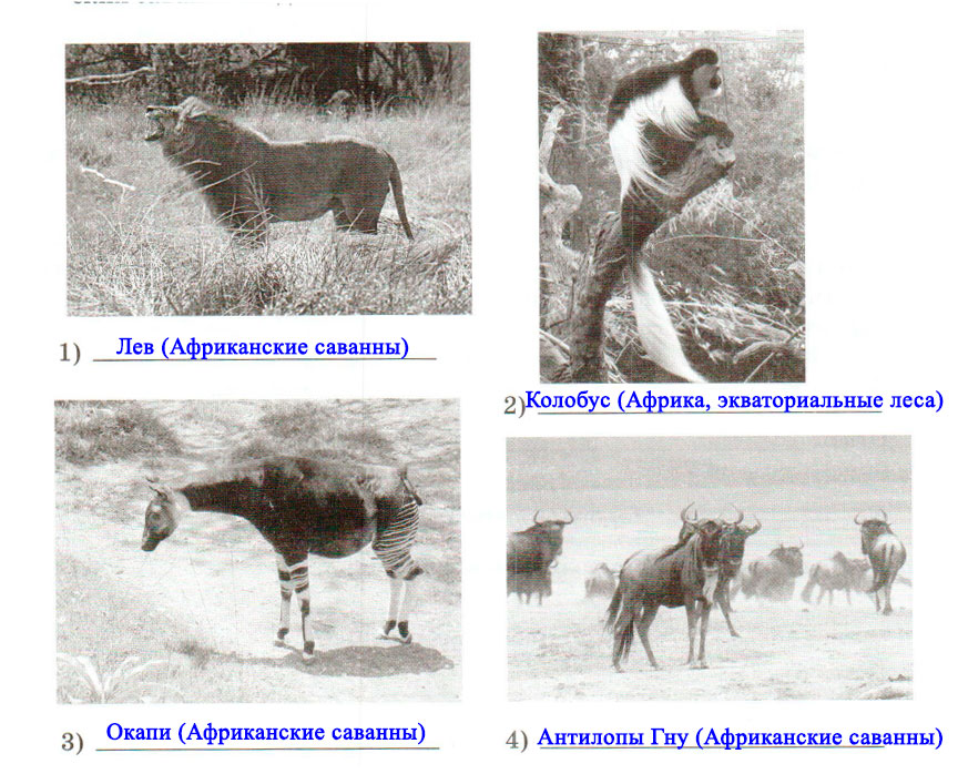 § 24. Разнообразие природы Африки - Домогацких. 7 класс 1 часть. Рабочая тетрадь