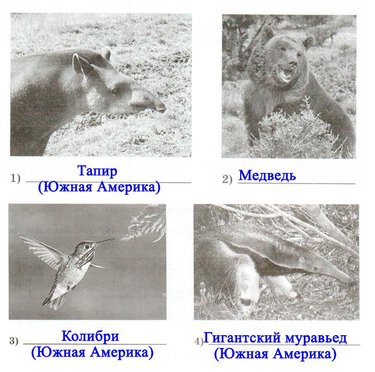 § 39. Разнообразие природы Южной Америки - Домогацких. 7 класс 2 часть. Рабочая тетрадь
