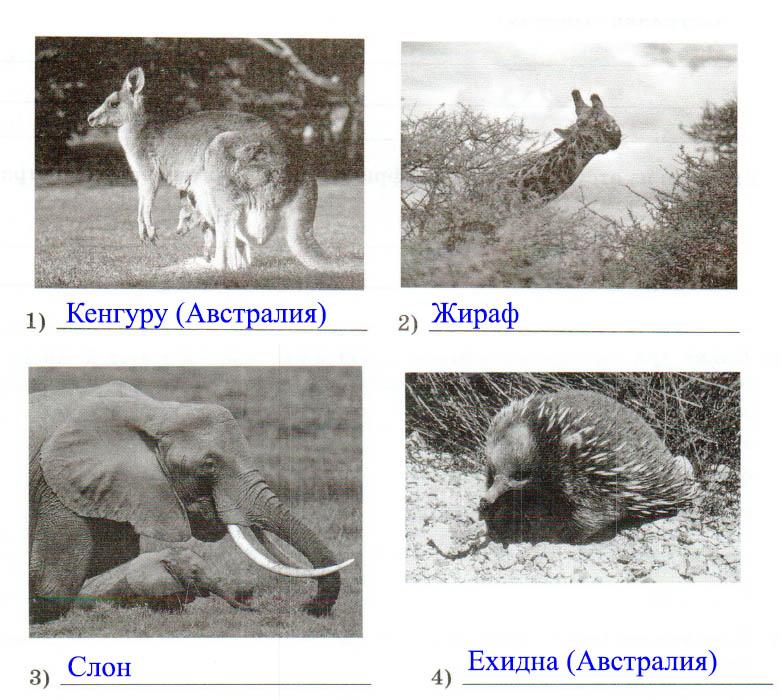 § 30. Особенности природы Австралии - Домогацких. 7 класс 2 часть. Рабочая тетрадь