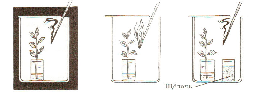 § 16. Фотосинтез