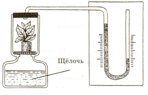 § 17. Дыхание растений