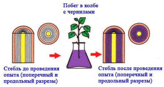 § 18. Испарение воды растениями. Листопад - Пасечник. 6 класс. Учебник
