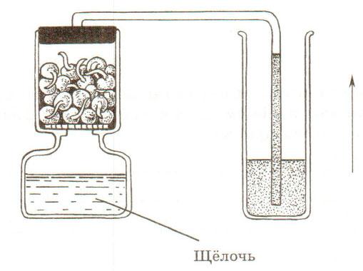 § 18. Испарение воды растениями. Листопад - Пасечник. 6 класс. Рабочая тетрадь