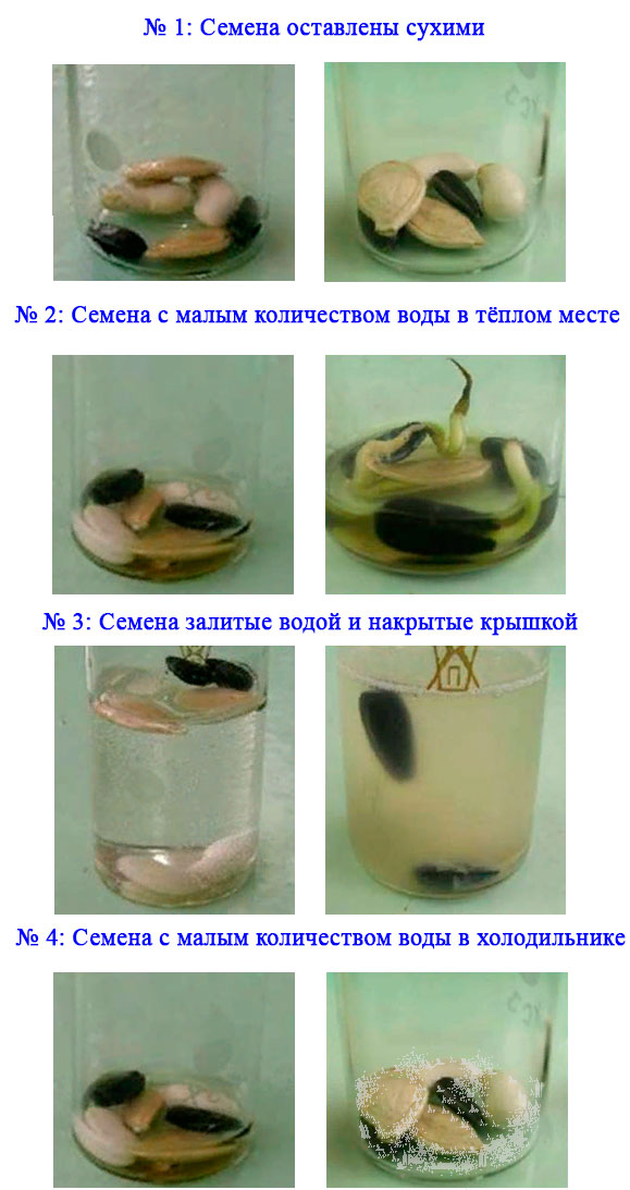 § 19. Передвижение воды и питательных веществ в растении