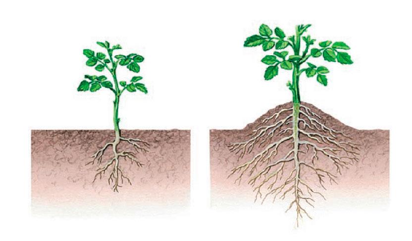 § 2. Виды корней и типы корневых систем - Пасечник. 6 класс. Учебник