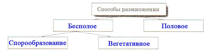 § 21. Способы размножения растений - Пасечник. 6 класс. Рабочая тетрадь