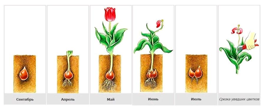 § 21. Способы размножения растений - Пасечник. 6 класс. Учебник