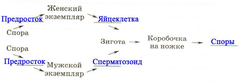 § 22. Размножение споровых растений - Пасечник. 6 класс. Рабочая тетрадь