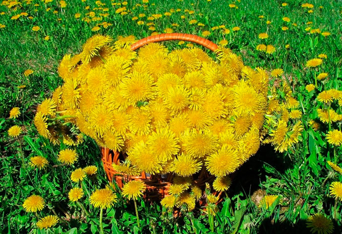 § 24. Половое размножение покрытосеменных растений - Пасечник. 6 класс. Учебник