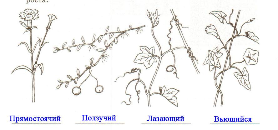§ 9. Строение стебля - Пасечник. 6 класс. Рабочая тетрадь