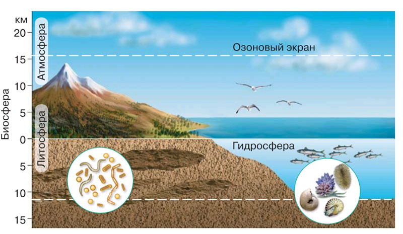 § 1. Биология — наука о живой природе - Пасечник. 5 класс. Рабочая тетрадь