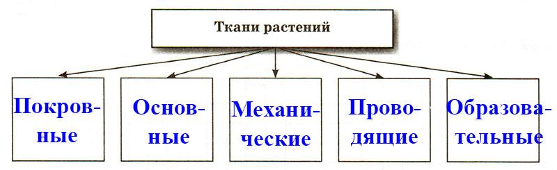 § 10. Ткани. Органы - Пасечник. 5 класс. Рабочая тетрадь