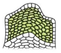 § 10. Ткани. Органы - Пасечник. 5 класс. Учебник