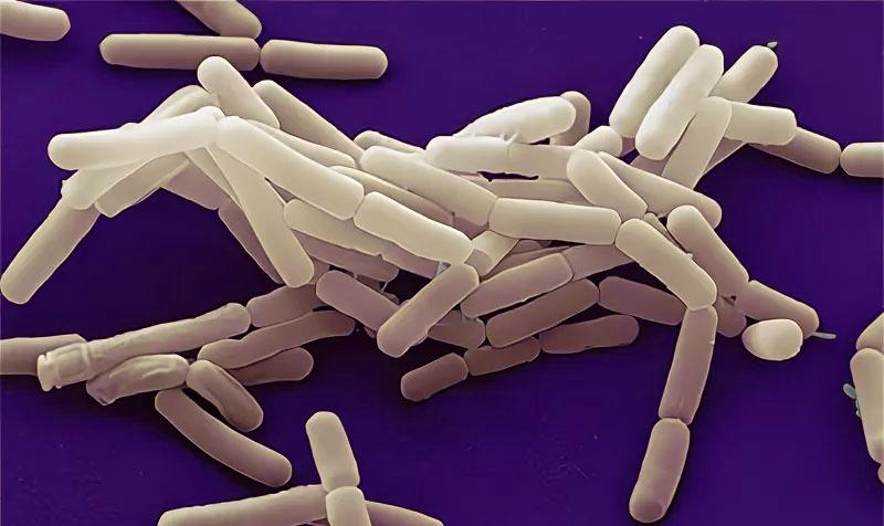 § 11. Строение и жизнедеятельность бактерий - Пасечник. 5 класс. Учебник