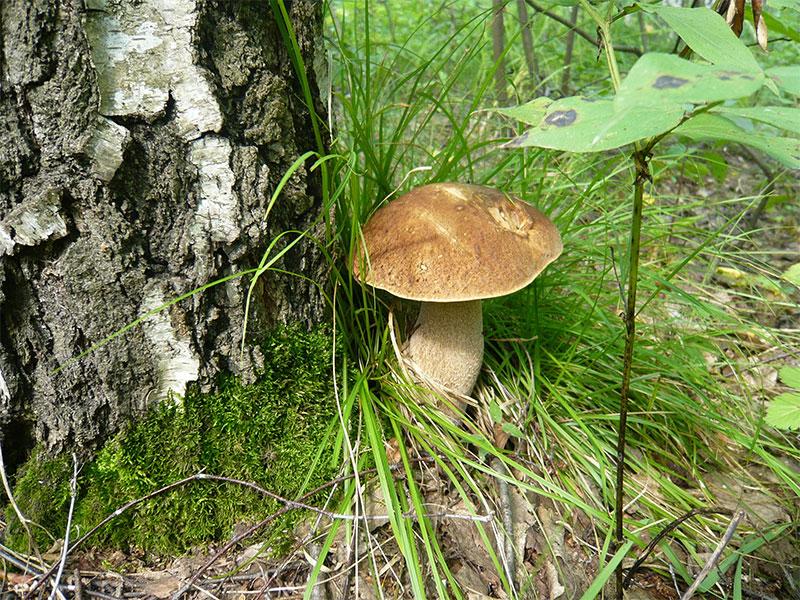 § 20. Общая характеристика грибов - Пасечник. 5 класс. Учебник