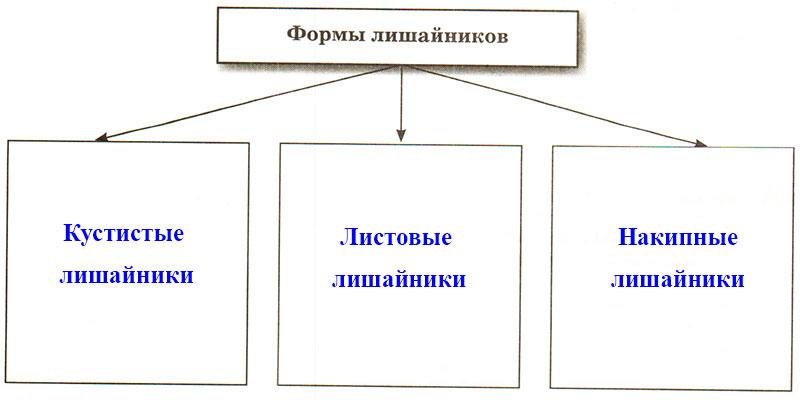 § 19. Лишайники - Пасечник. 5 класс. Рабочая тетрадь