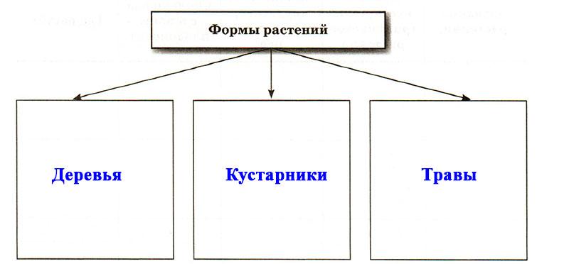 § 18. Покрытосеменные, или Цветковые - Пасечник. 5 класс. Рабочая тетрадь