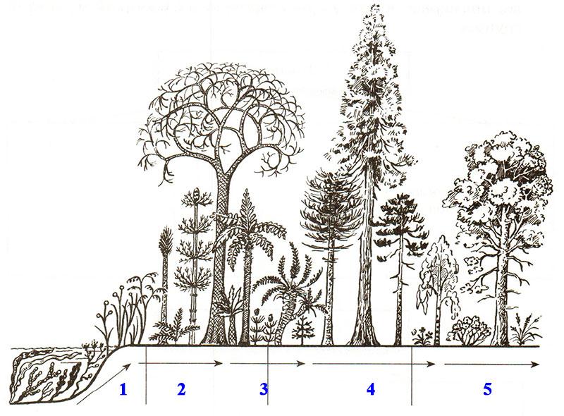 § 24. Происхождение растений. Основные этапы развития растительного мира