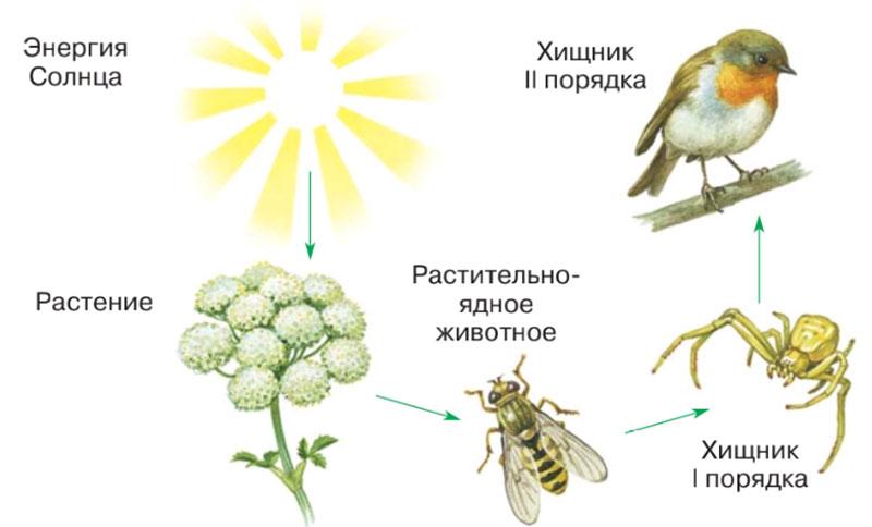 § 3. Разнообразие живой природы. Царства живых организмов. Отличительные признаки живого - Пасечник. 5 класс. Учебник