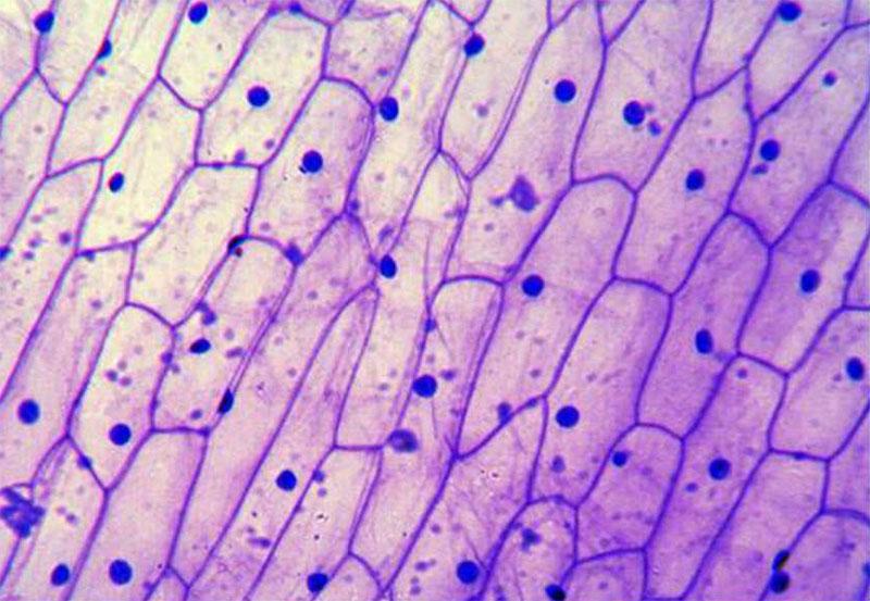§ 7. Строение клетки - Пасечник. 5 класс. Рабочая тетрадь