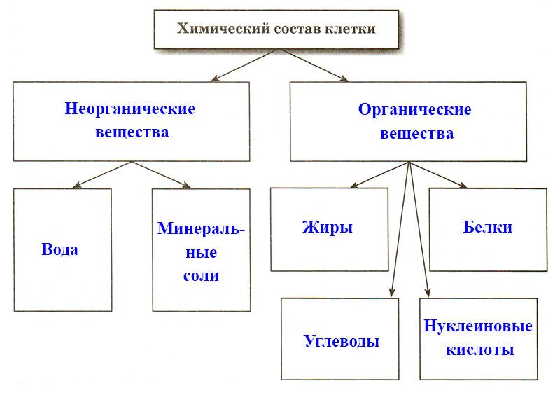 § 8. Химический состав клетки - Пасечник. 5 класс. Рабочая тетрадь